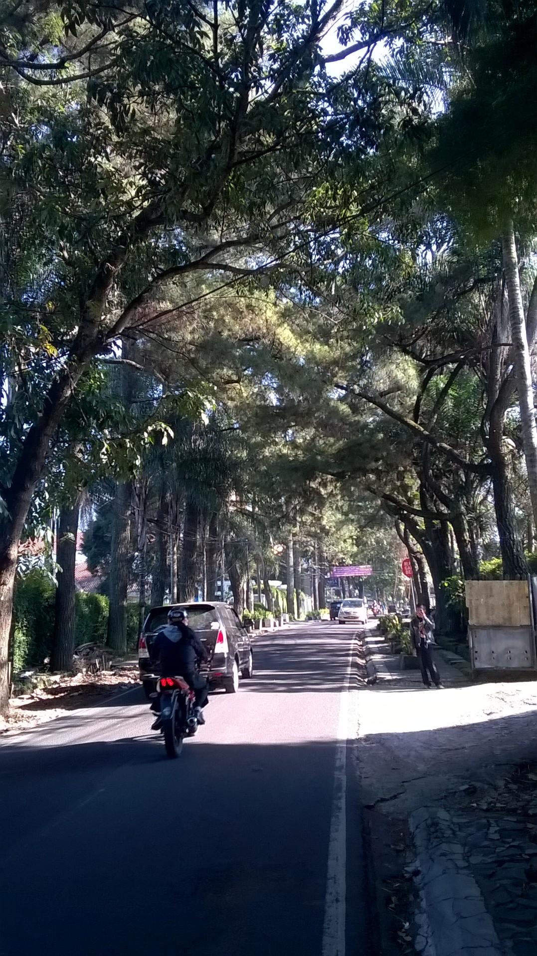 More greeneries in Hegarmanah street.